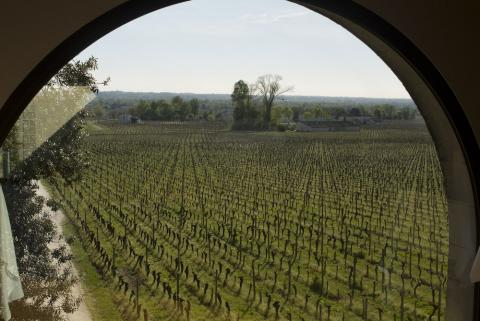 From the tasting room in St.Emilion
