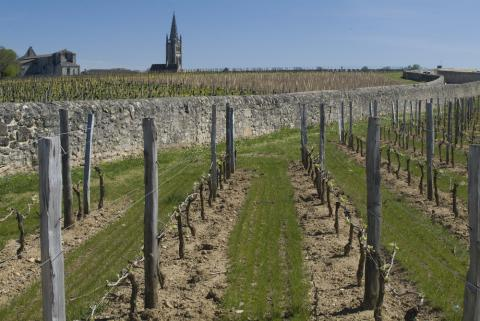 Up on the plateau of St.Emilion where limestone rules