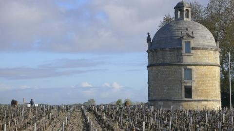A Tower of Power: At first glance, the wines of Château Latour look stupendous in this vintage. Les Forts de Latour, not really a second wine because it has its own vineyards, is the equal of a good cru classé. With 90.5% cabernet sauvignon and at 14.4% alcohol, Château Latour itself is locked in a vice-like grip of iron and should emerge from its shell in about 20 years time. Note the horses in the vineyard.