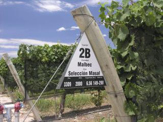 Malbec at Septima, Mendoza, Argentina